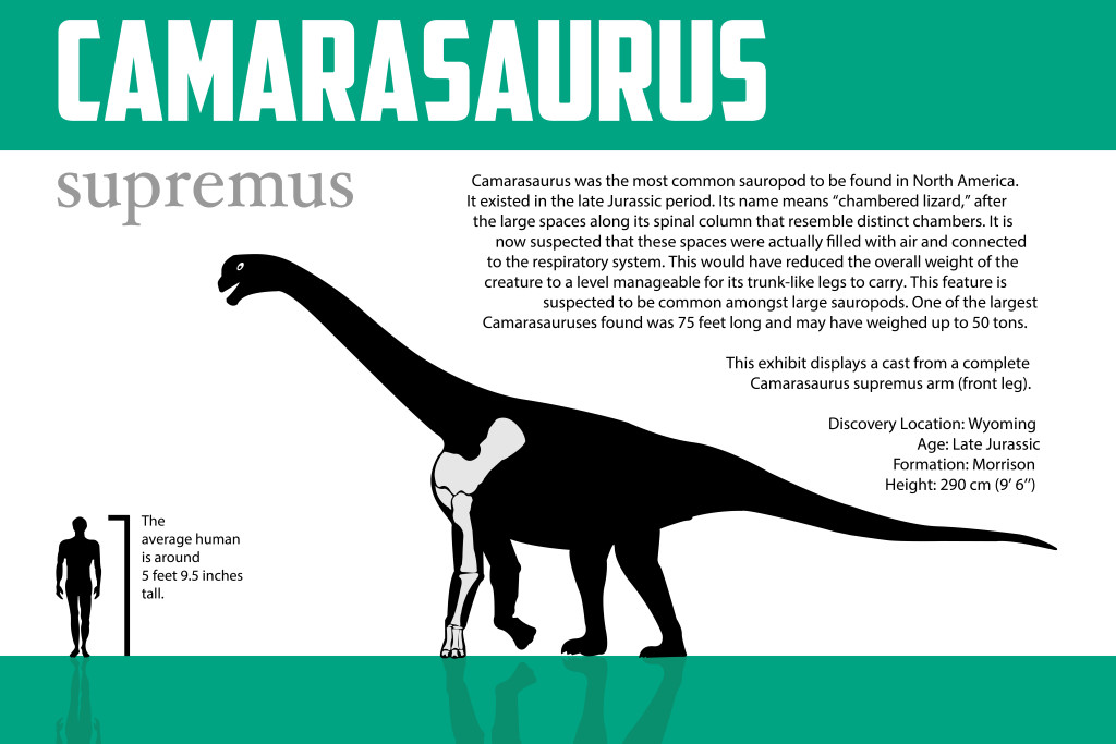 Camarasaurus Graphic 2 (1) (1)-01